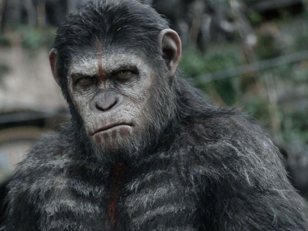 33-Apes.jpg