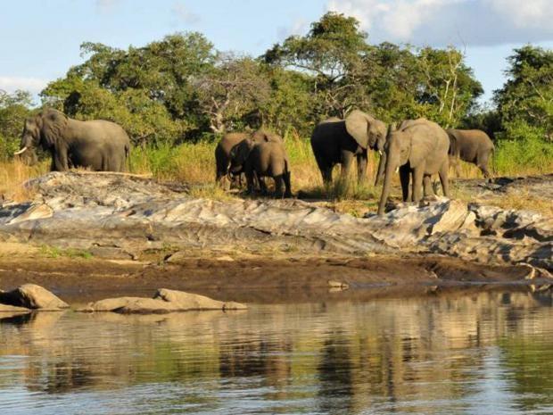 safariele.jpg