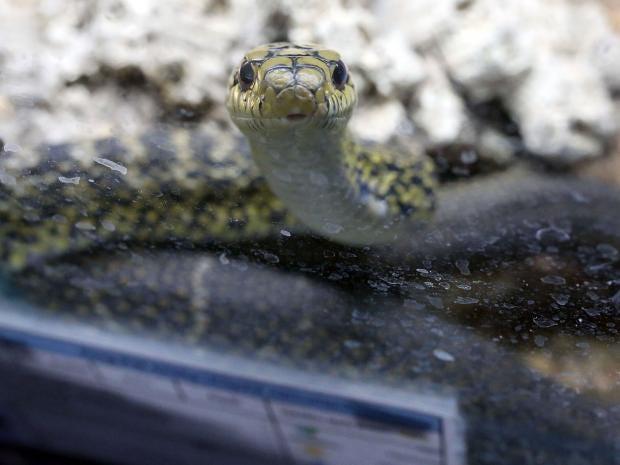 snake-SI.jpg