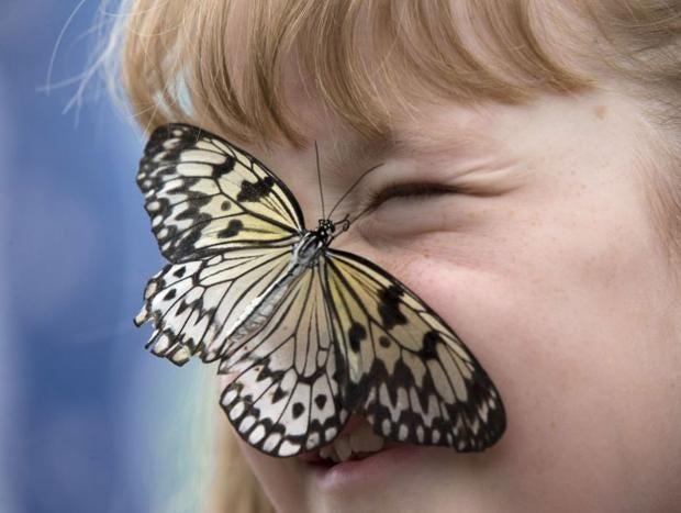 Butterfly-GET.jpg