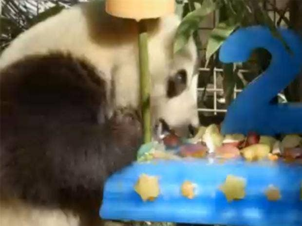Giant-panda.jpg