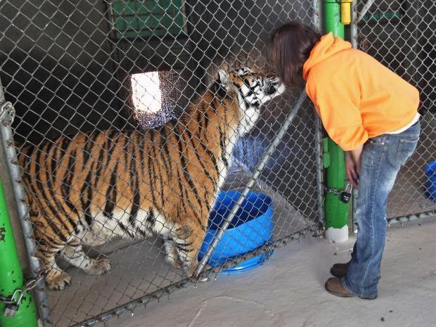 web-tiger-2-getty.jpg