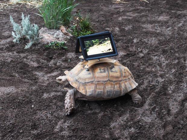 tortoise-ipad.jpg