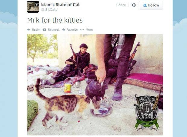 isil-cats.jpg