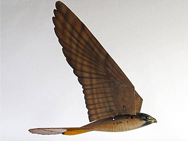 web-robird.jpg