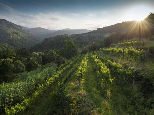 pg-26-tuscan-wine-rex.jpg