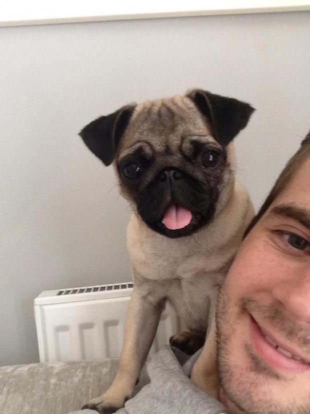 dog-selfie-3.jpg