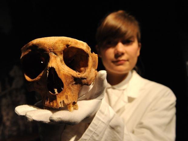 HumanSkull-Rex.jpg