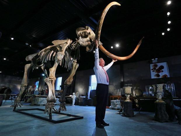 mammoth2-pa.jpg