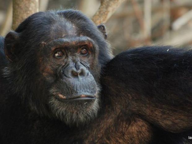 chimp-pa.jpg