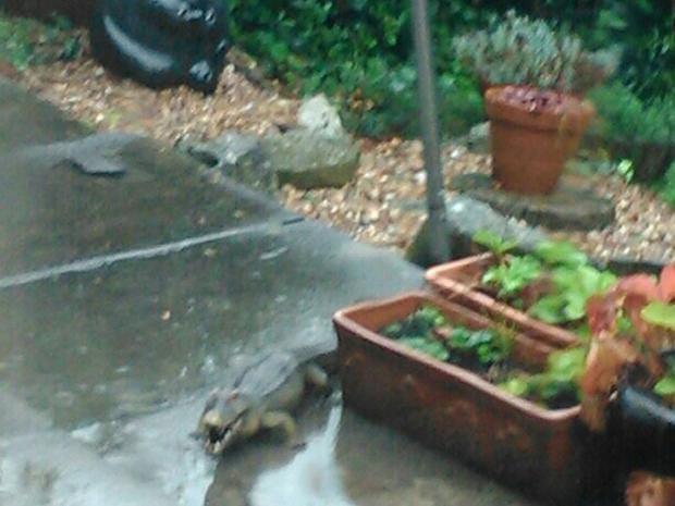 CrocodilePA.jpg
