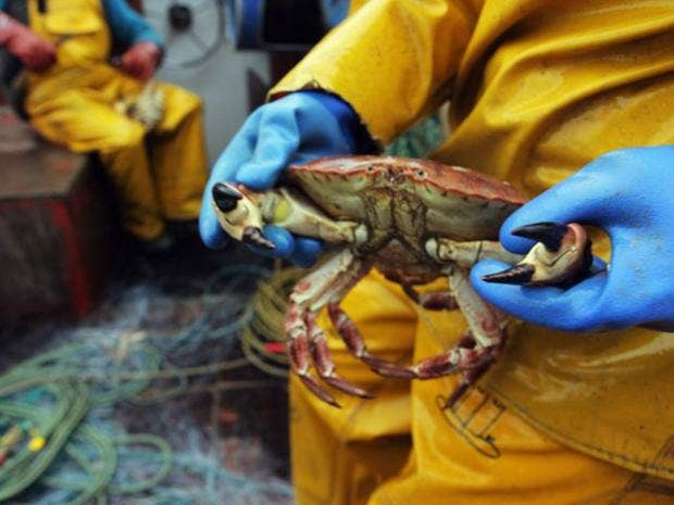 15-Crab-getty.jpg