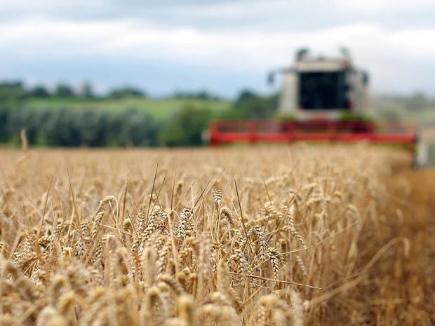 harvest-2.jpg