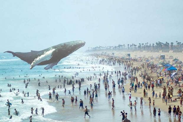 magicleapdoes awhale.jpg