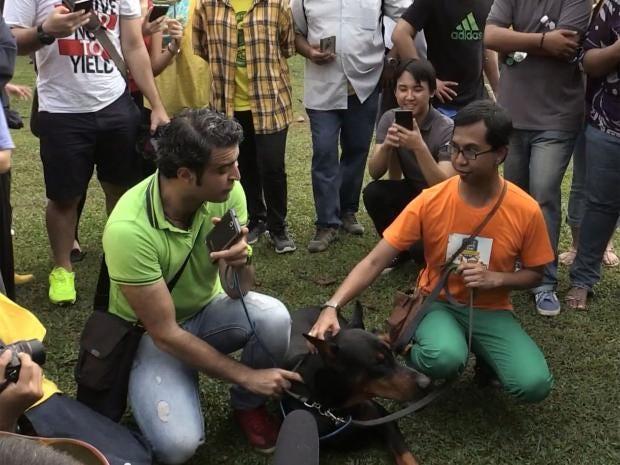 dog-petting.jpg