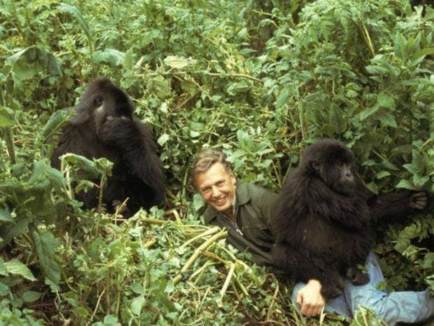 3-DavidAttenborough.jpg