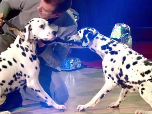 strictly-come-dancing-dogs.jpg