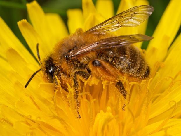 pg-10-bees-alamy.jpg