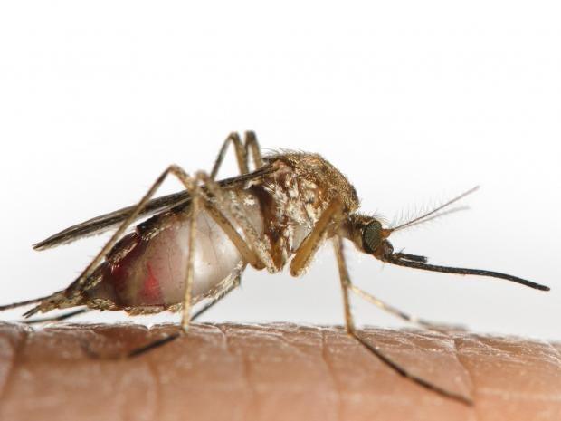 web-mosquito-RF-gettyc.jpg