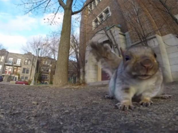 GoPro-squirrel.jpg