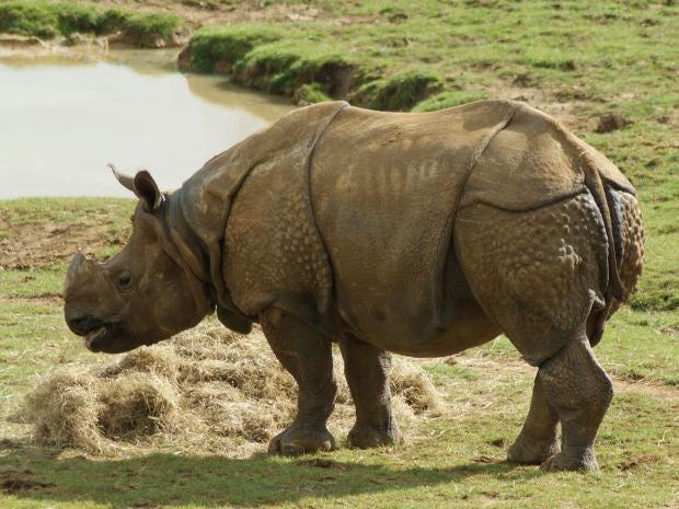 whipsnade-rhino-2.jpg