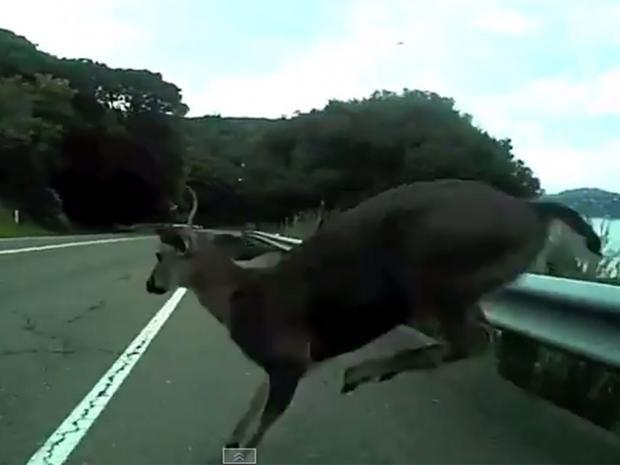 Oh-Deer.jpg