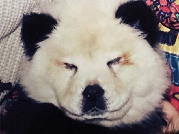 pg-22-panda-dogs-isfc.jpg