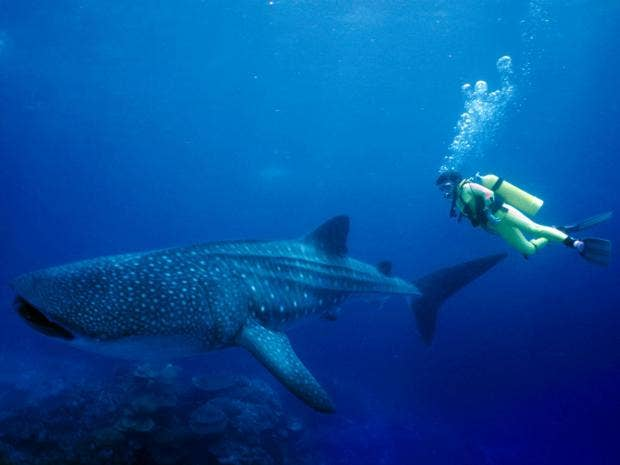 15-WhaleShark-Alamy.jpg
