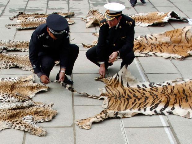 china-tiger.jpg