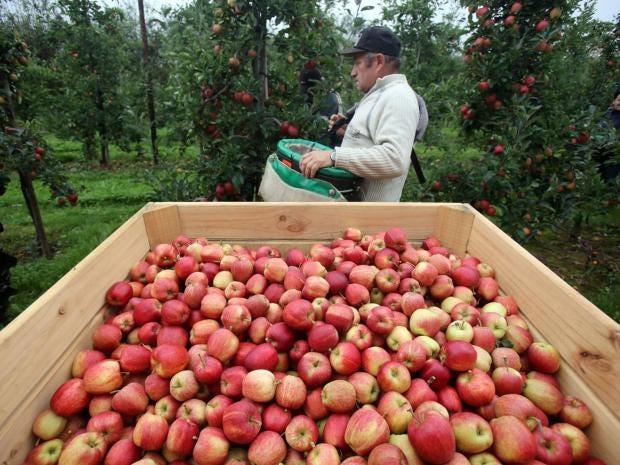 19-Apples-Getty.jpg
