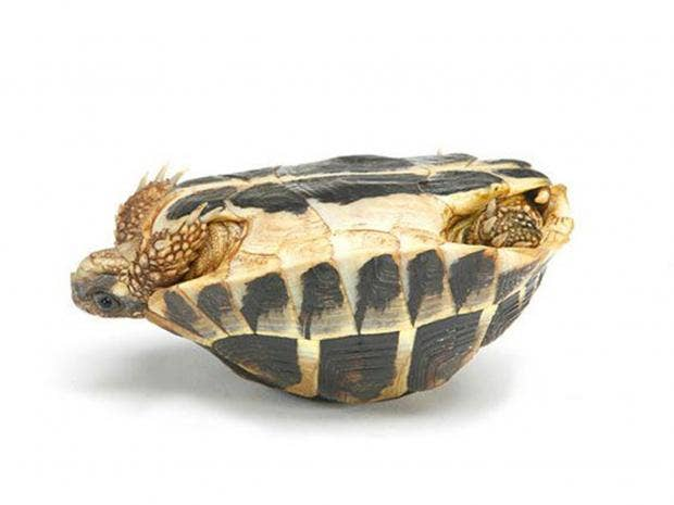 3-Tortoise2-Alamy.jpg