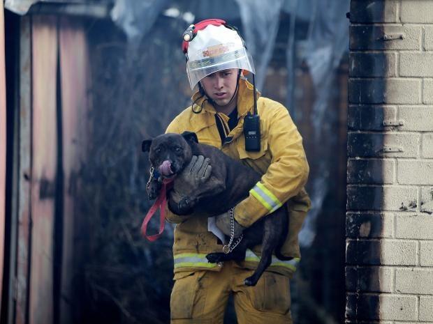 tea-tree-gully-dog-cat-fire-rescue-australia.jpg