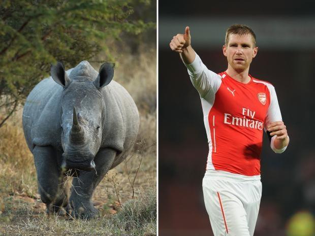 Rhino-Mertesacker.jpg