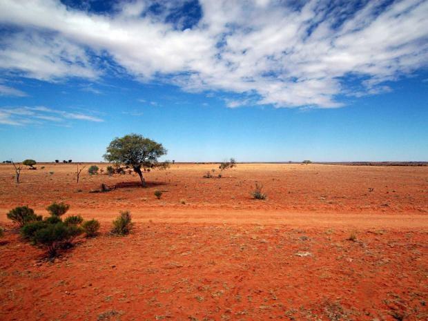 outback-rex.jpg