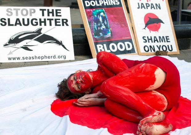 Japan-Dolphins.jpg