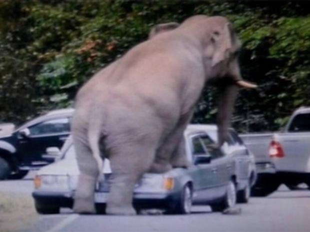 web-thai-elephant.jpg