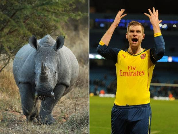 Rhino-Mertesacker.jpg