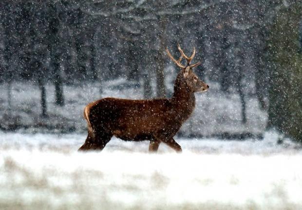 deer-pa.jpg