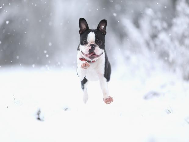 blizzarddogs.jpg