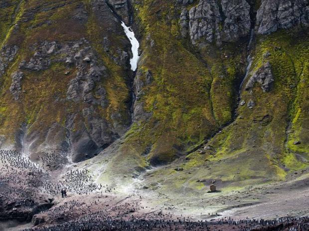 wanderlust_penguins.jpg