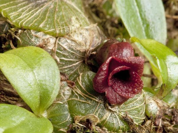 pg-12-kew-orchid-1.jpg