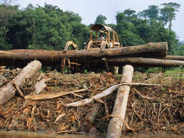 rainforest-3.jpg