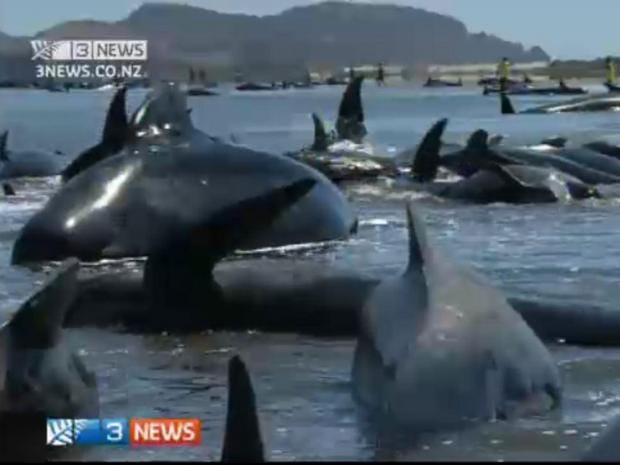 strandedwhales.jpg
