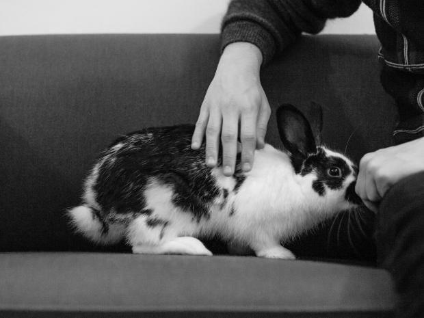 31-rabbit.jpg