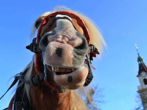 Horse-Breeding-Getty.jpg