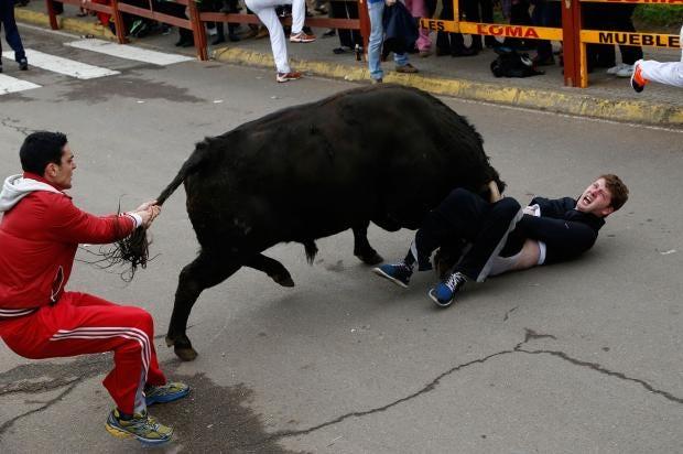 miller-bulls3.jpg