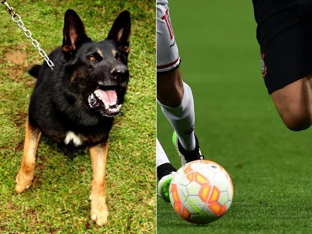dog-football.jpg