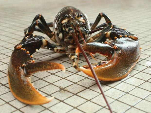 22-Lobster-Getty.jpg