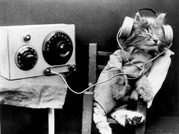 musiccat.jpg