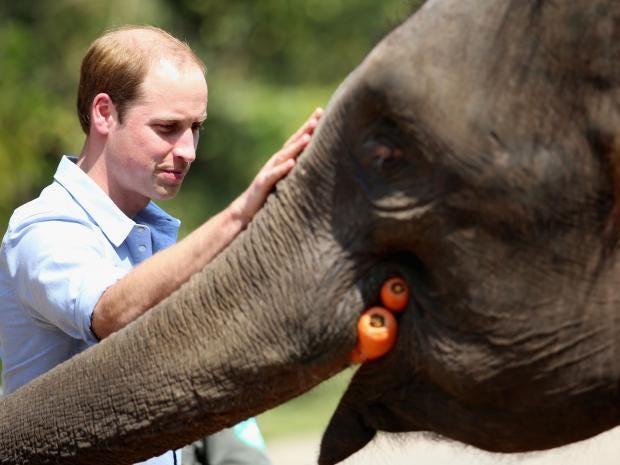 William-elephant-close-1.jpg